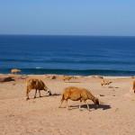 nomad surf trip